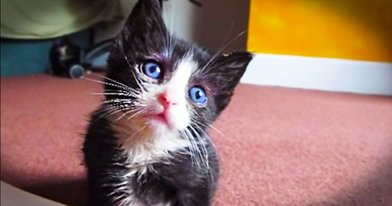 It Looks Like An Adorable Kitten, But It's Really A Secret Weapon Against Stress! So. Stinky. CUTE!