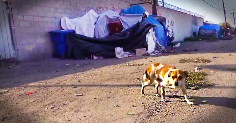 This Pup Was Broken And Alone. But He's Not The Only Homeless Soul That Needed Love - Wow!