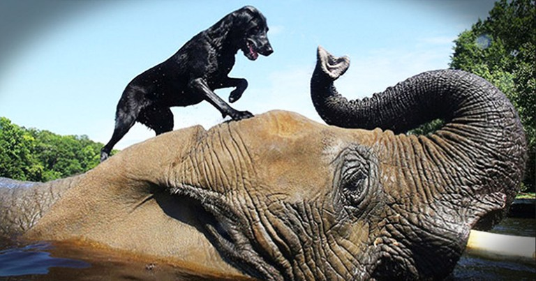 This Dog and Elephant Have Something Strange in Common - They are BEST Friends