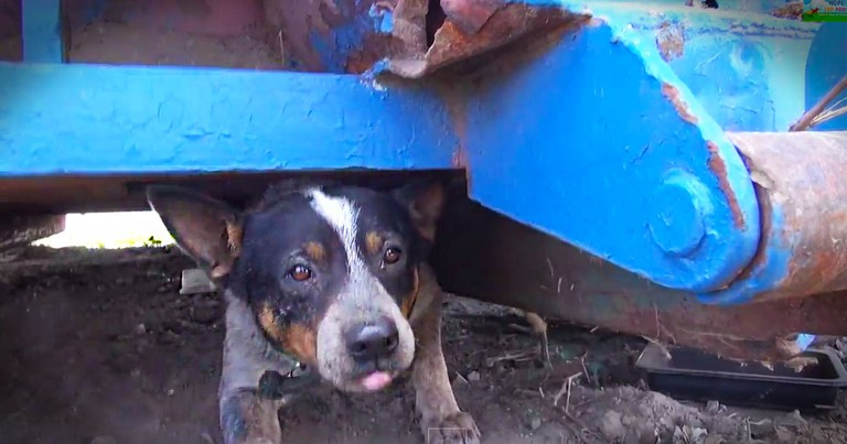 When I Saw Where This Dog Was Living, My Heart Sank. But Then Kind Rescuers Found Him A Forever Home