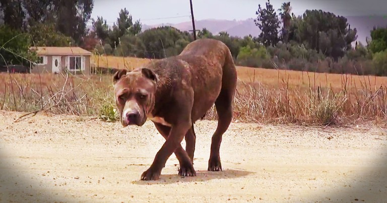 This Scared, Homeless Dog Struggled to Survive. But Seeing What Happens At 3:06 Lifted My Heart!