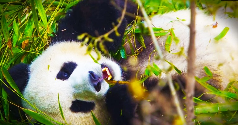 This Panda Is Keeping One VERY Big Secret. And Now I Can't Stop Laughing!