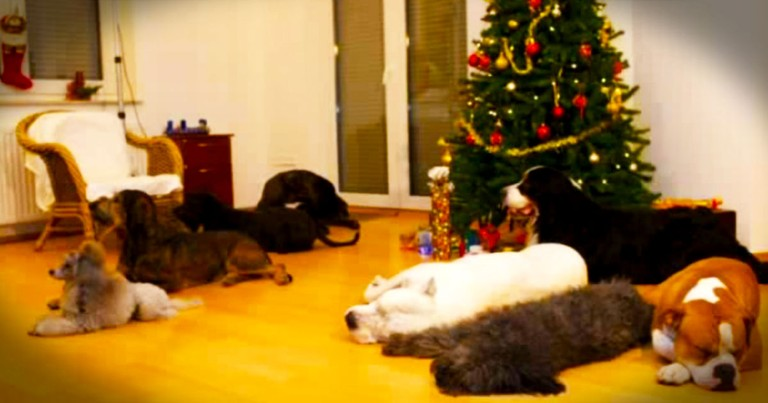 Sweet Dogs Leave A Christmas Surprise For Their Humans