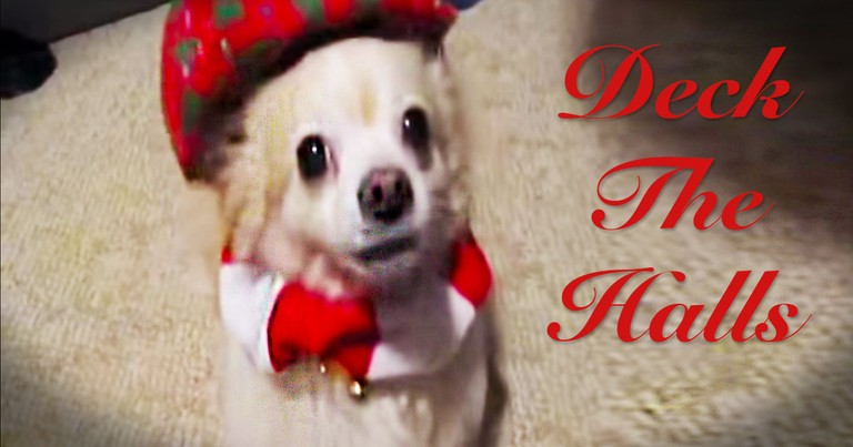 Cute Animals 'Sing' A Christmas Carol