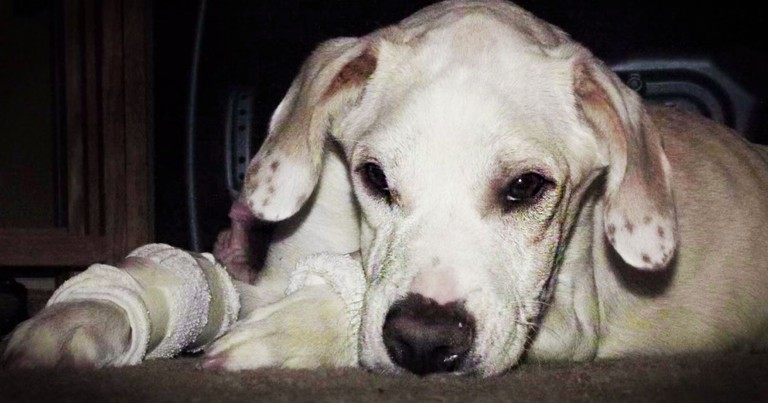 Dog Abandoned By 'Family' Gets A 2nd Chance