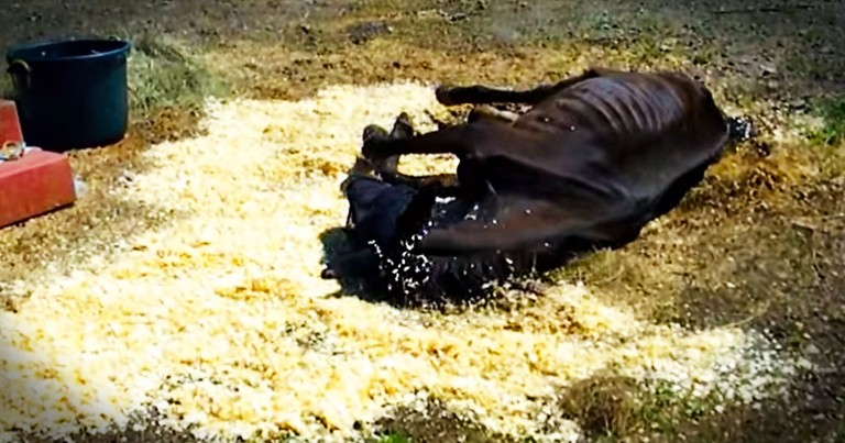 Neglected Horse Gets A Beautiful Second Chance