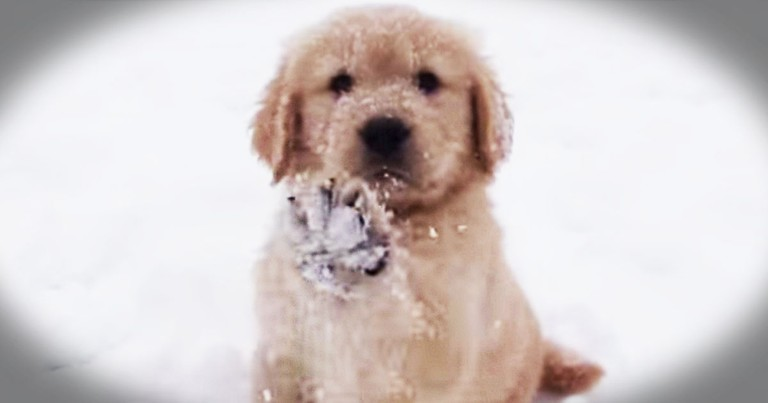 Puppy Enjoys Her First Romp In The Snow