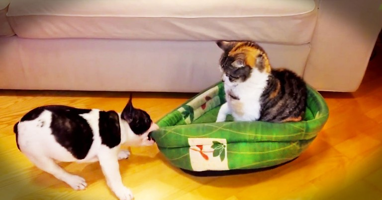 Patient Kitty Refuses To Return Puppy's Bed