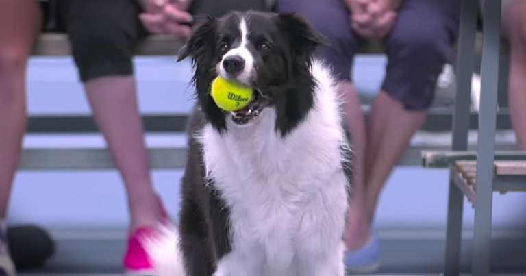 Star Has A BALL With Her 4-Legged Friends