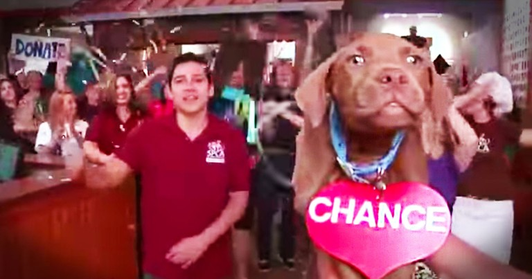Cutest Lip-Dub Music Video is Helping Its Stars Find Forever Homes