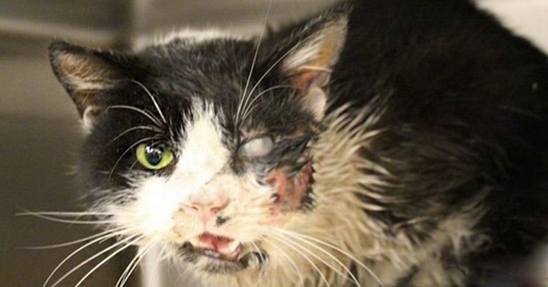 Miracle Cat Shocks Owner By Returning 5 Days After The Grave!