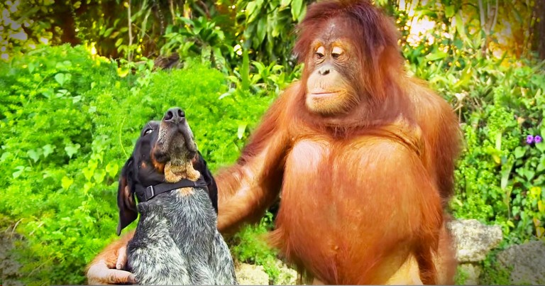 These Unlikely Animal Pairs Will Melt Your Heart--Aww!