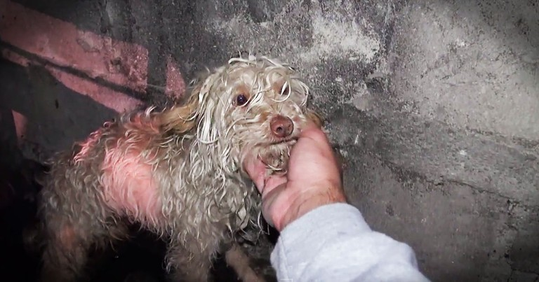 Poor Pup Gets Amazing Rescue From A Sewer Drain!