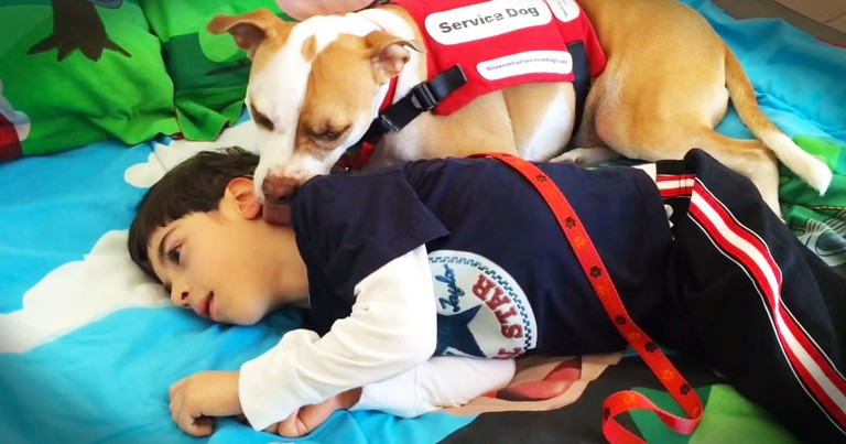 Little Boy's Service Dog Rejected From School Because Of Breed