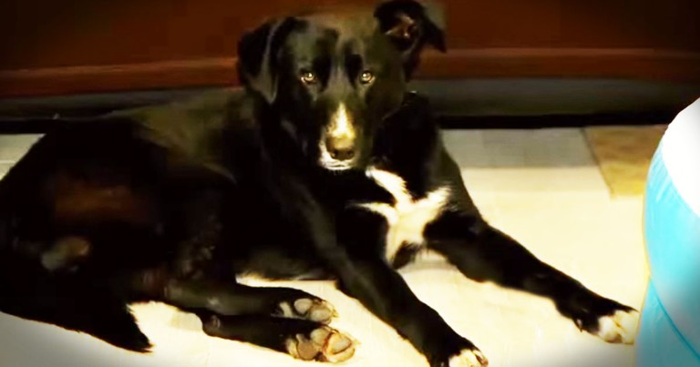 Abandoned Dog Is A HERO! Wait 'Til You Hear Why-Aww!