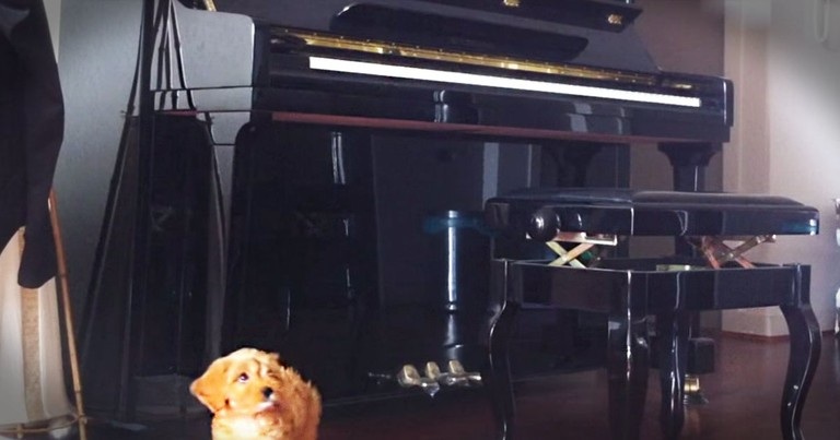 Apparently, This Pup LOVES The Piano--Aww!