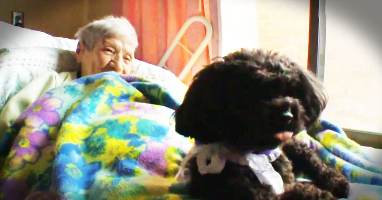 This Abandoned Dog Is Clearly Doing God's Work In This Nursing Home--TEARS!