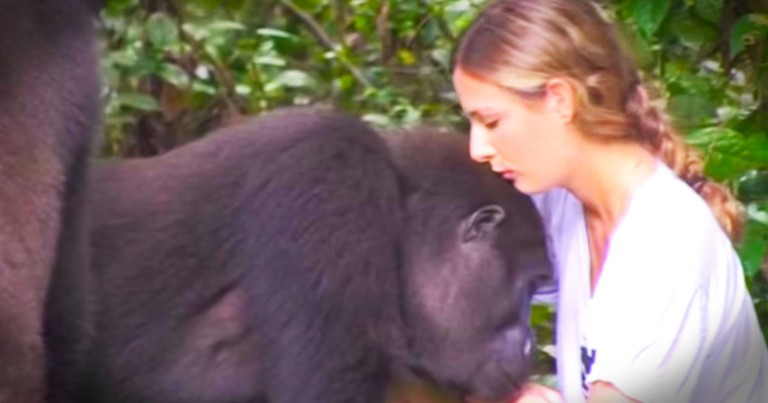 He Was Scared By What The Gorillas Might Do. Then THIS Happened--WHOA!
