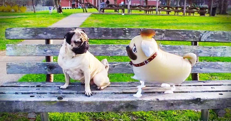 Dog Has Adorable Play Date With His 'Twin' BFF--LOL