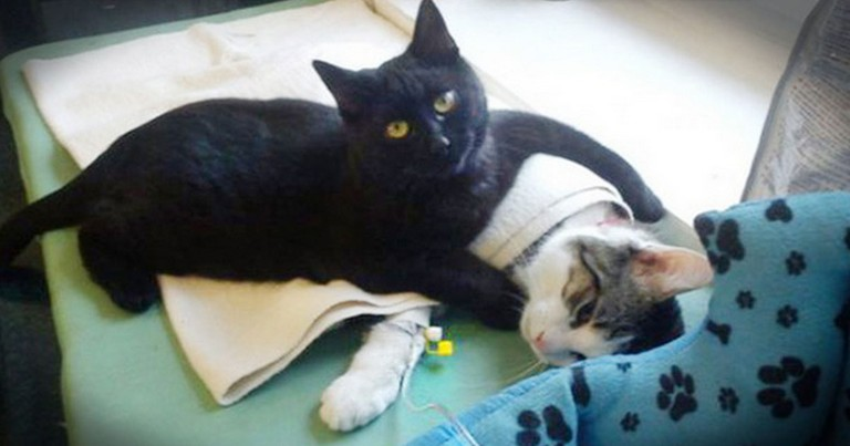 Kind Strangers Save This Kitty. . .What It Did NEXT Stunned Everyone!