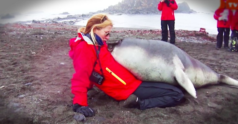Apparently, This Baby Elephant Seal REALLY Wanted A Cuddle!