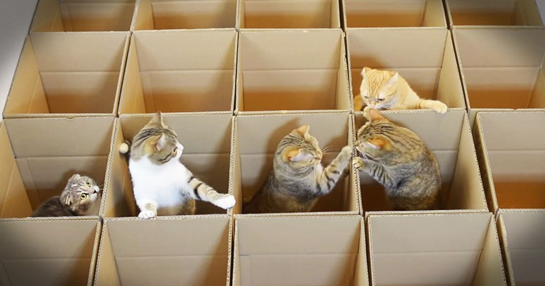 Kitties In Boxes Are A Cuteness Overload!