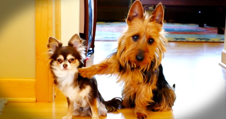 Apparently, This Dog Didn't Want To Get Blamed For What Happened In The Kitchen--LOL!