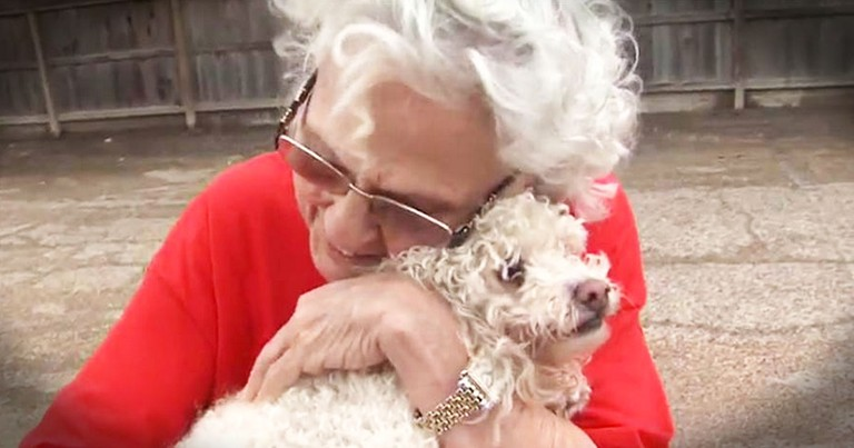 Grandma Thought Her Dog Was Lost In A Flood Until Rescuers Delivered A Miracle!
