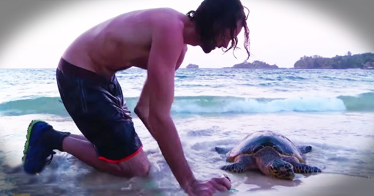 They Thought This Endangered Sea Turtle Was A Goner--Then They Did THIS!