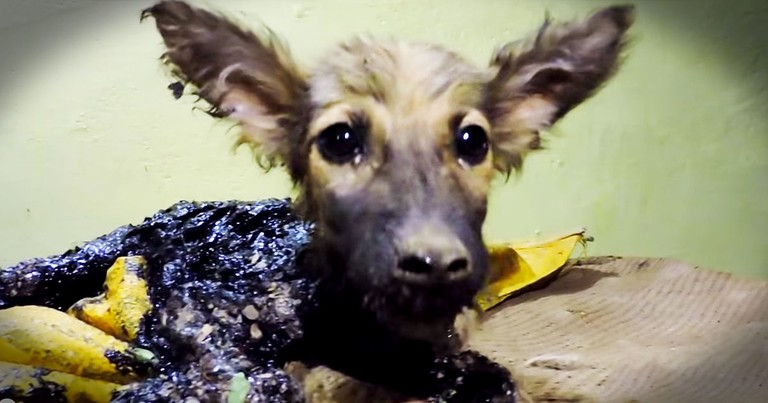 Poor Pup Was Trapped In Tar Until THIS Rescue!