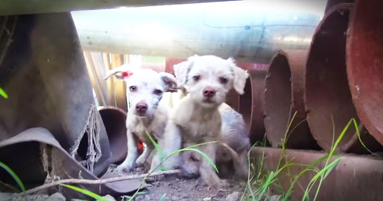 Family Of Dogs Living In a Steel Yard Get An Amazing Rescue!