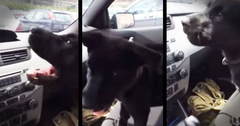 Puppy Dog Just Discovered Air Conditioning -- Cuteness Overload!