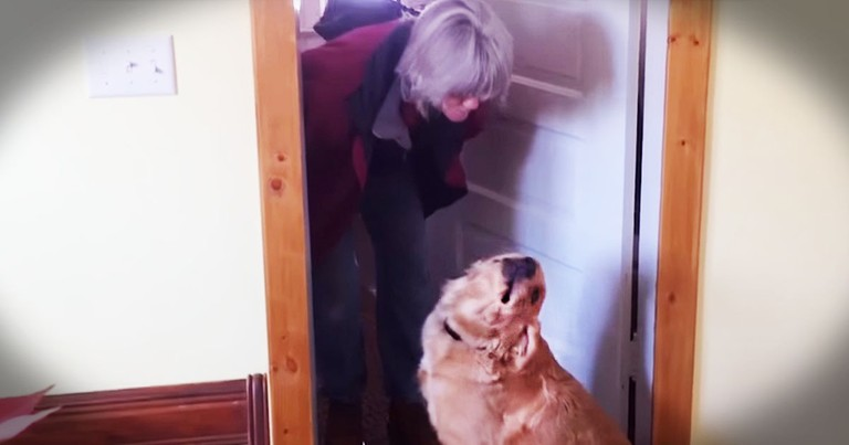 She Wanted Just One Kiss. Her Dog's Reaction Is Priceless!