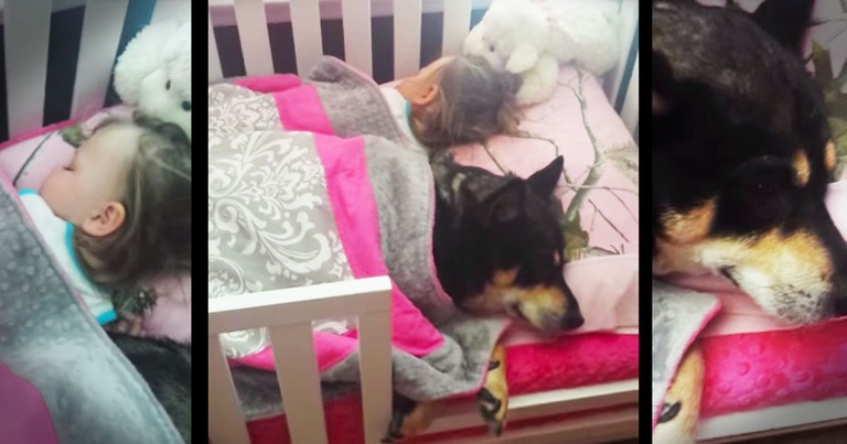 She Searched All Around For Her Service Dog Until She Found Him HERE--Aww!