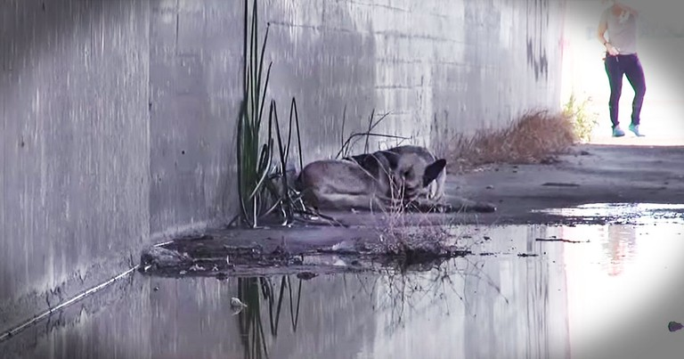 This River Dog Rescue Gave Me Hope For Homeless Dogs Everywhere