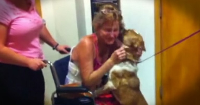 This Dog Survived 65 Days In The Desert To Be Reunited With Her Owner