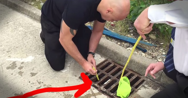 Ducklings Stuck In Storm Drain Get Creative Rescue