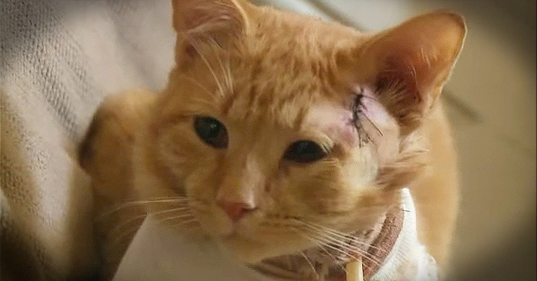 This Cat Took A Bullet For His Favorite Little Boy...WOW!