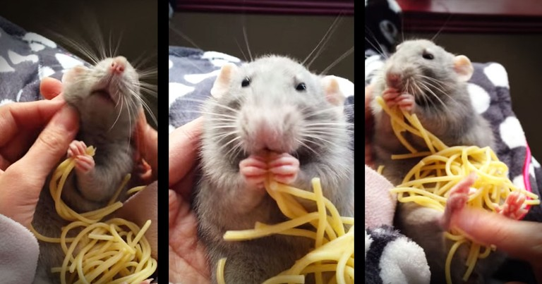 Rat's Spaghetti Snack Is Too Cute For Words