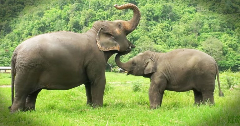 Seeing What Makes These Elephants Happy Will Make You Happy Too!