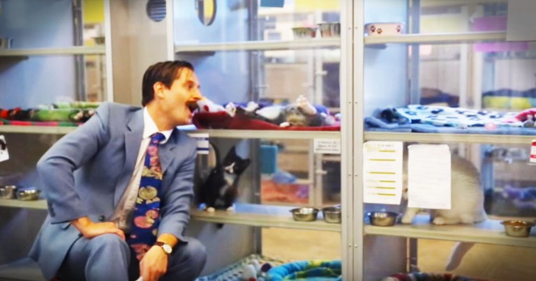 Human Society's Funny Video Helps Cats Get Adopted