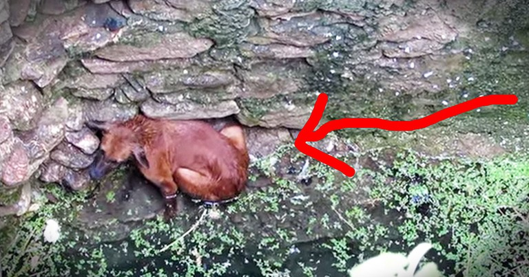 Street Dog Falls In Well But Then Kind Strangers Do THIS!