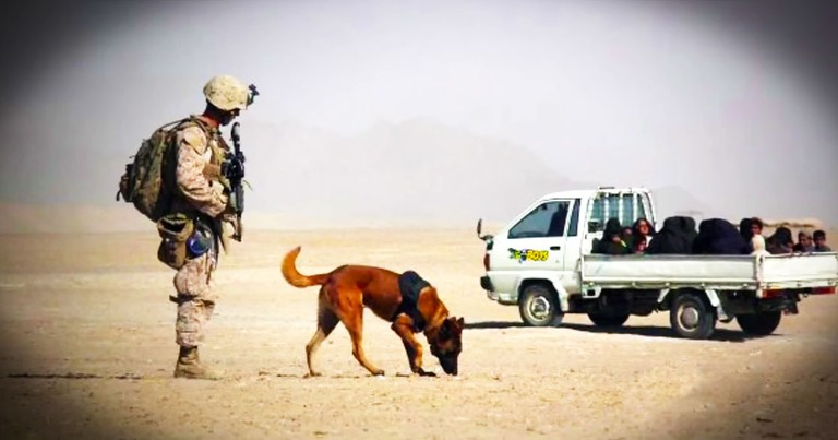 Veteran Finally Reunited With The Dog Who Saved His Life