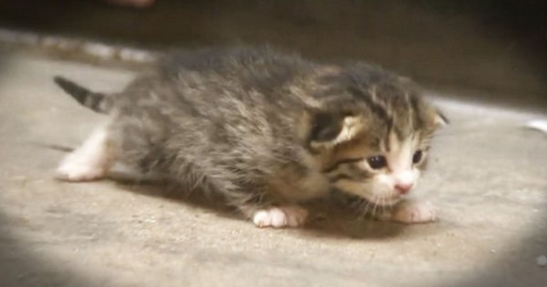 Kitten Saved Seconds Before Going Into Trash Compactor Gets Amazing New Life