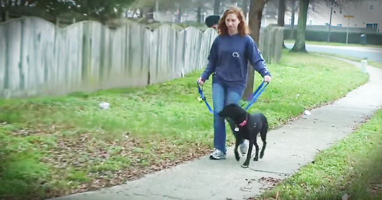 Dog Leads Owner To A Missing Woman And Saves Her Life