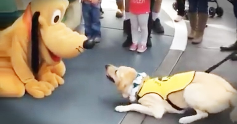 Service Dog Meeting Pluto Brings The Giggles