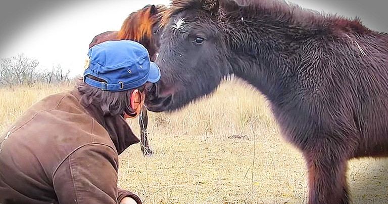 Chained Horse's 'Thank You' To Rescuers Is Moving
