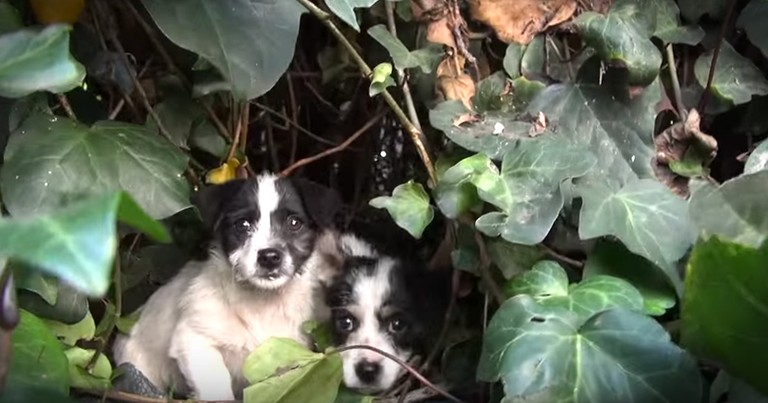 5 Puppies Get Dramatic Rescue