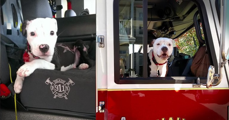 Puppy Saved From Fire Grows Up To Be The Firefighter's Mascot