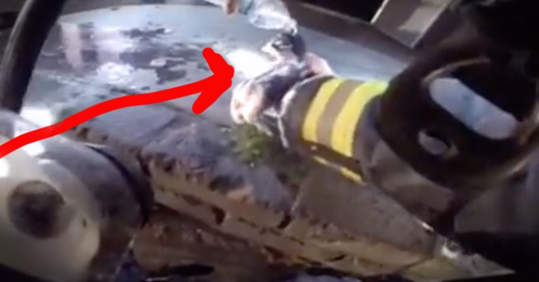 Firefighters Rescue Kittens In Dramatic Body Camera Footage
